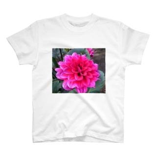 Daria T-shirts