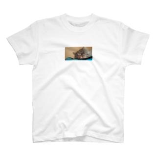 猫の昼寝 T-shirts