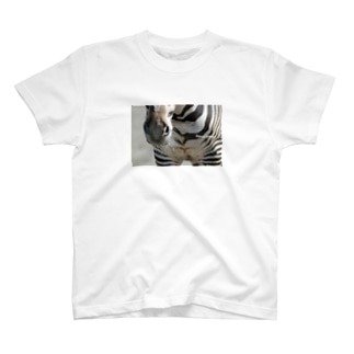 Equus grevyi T-shirts