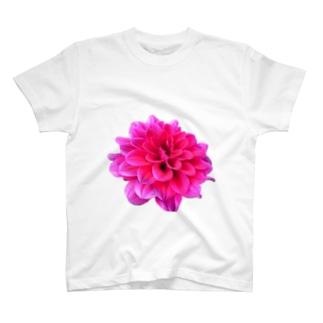 Daria-P T-shirts