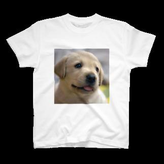dohshinのラブラドール・レトリバーの子犬 T-shirts