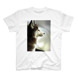 シベリアンハスキー T-shirts