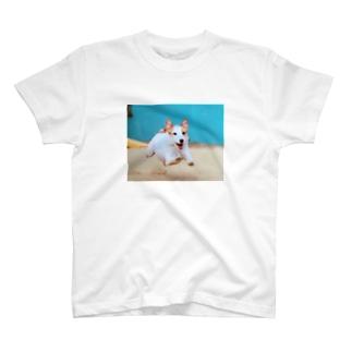 にこにこジャックさん 飛行犬 T-shirts