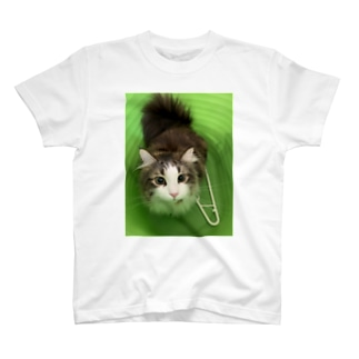 ロイ T-shirts