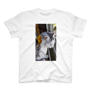 たんぽぽにゃんこ T-shirts