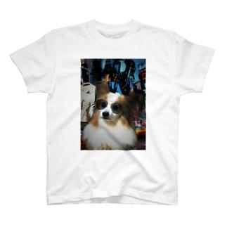 パピヨンさん T-shirts