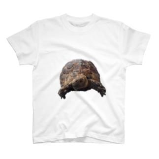 mora T-shirts