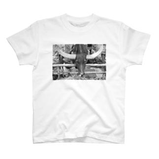 水牛T T-shirts