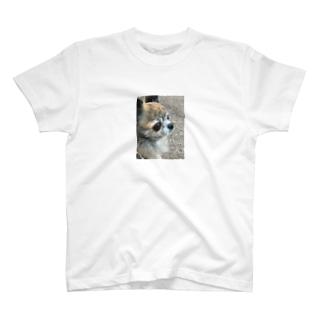 チワワのナッツくん T-shirts