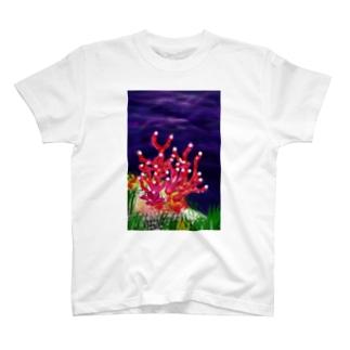 サンゴ T-shirts