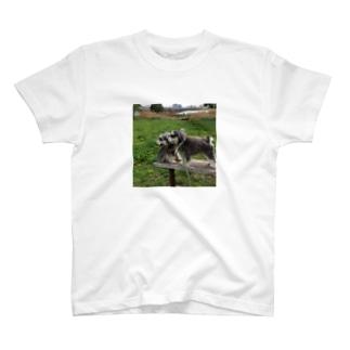 トランプくんとオリバーくん T-shirts