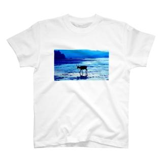 MIYAZIMA  T-shirts