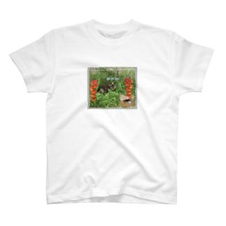 亜熱帯庭CAT T-shirts