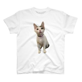 P&R T-shirts