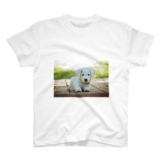 ワンチャンの商品です T-shirts