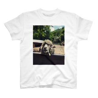 ヒツ次元 T-shirts