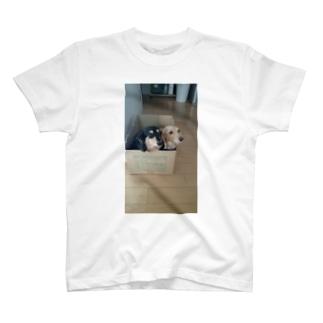箱入りの犬 T-shirts