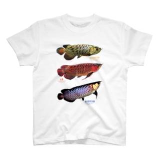 3種類のアジアアロワナ T-shirts