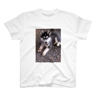 子犬チョビ T-shirts