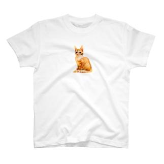 KAWAII CHATORA NEKO T-shirts