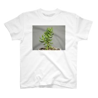 多肉植物B T-shirts