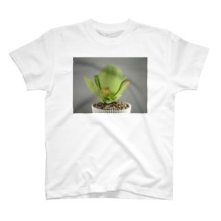 多肉植物A T-shirts