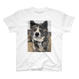 よしたかの妹が飼ってるごま太郎だか二郎っていうまあまあデカめのイッヌ T-shirts