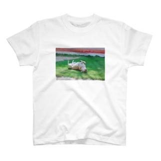 世界のノラ犬さんたち。(ひっくり返るえでぃしょん) T-shirts