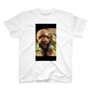 トイプードルのもこ T-shirts