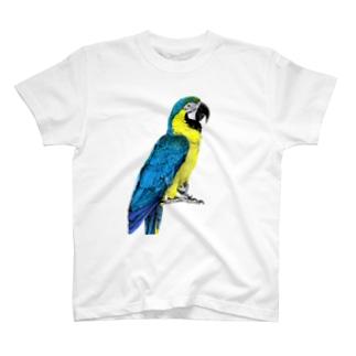 るりこんごう T-Shirt