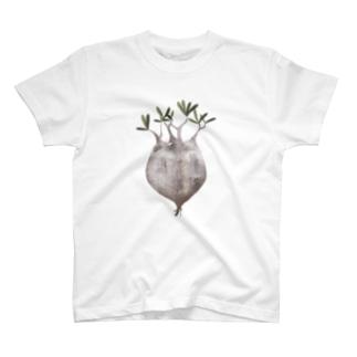 パキポディウムグラキリス現地球抜き苗 T-shirts