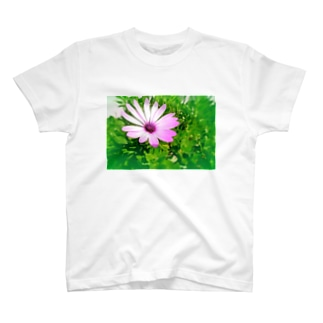 ポッと咲いていたディモルフォセカ T-shirts