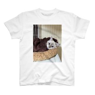 すまき猫 T-shirts