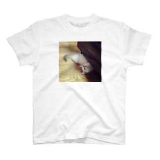 ちらり猫 T-shirts