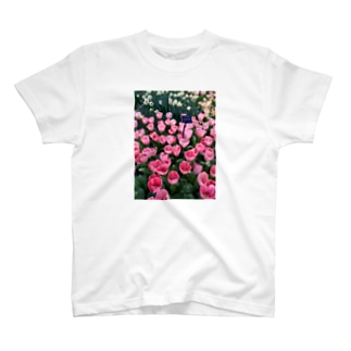 Tulips in Netherlands T-shirts