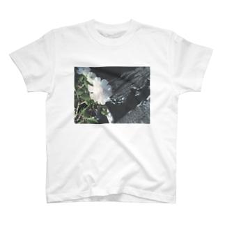 白い花 T-shirts