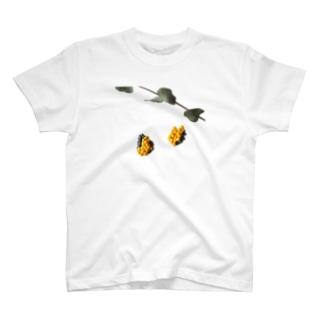 陶土ミモザ&ユーカリ  T-shirts