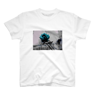 cold rose T-shirts