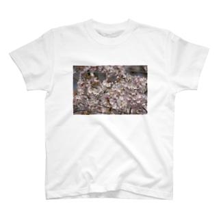 光景 sight0053 桜 2015_009 サクラ T-shirts