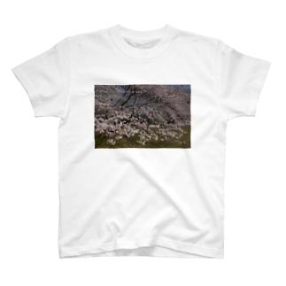 光景 sight0054 桜 2015_010 サクラ T-shirts