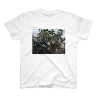 朝咲いてた花 T-shirts