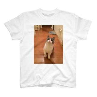 ブリショー吟 T-shirts