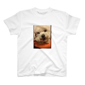 チワプー T-shirts