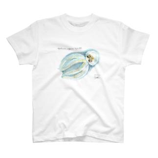 クラゲダコ Amphitretus pelagicus T-shirts