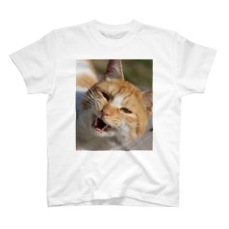 こまつ T-shirts