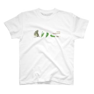 kitaooji shop SUZURI店のAsian Swallowtail T-shirts