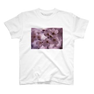 桜 サクラ cherry blossom DATA_P_092 T-shirts