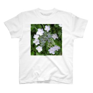 みかん葉ガクアジサイ T-shirts