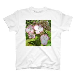 清澄沢アジサイ T-shirts