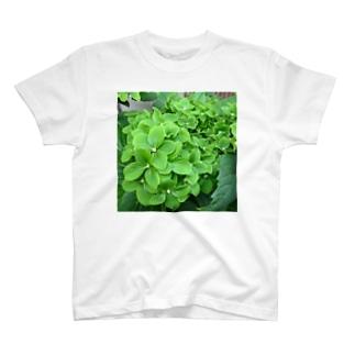 緑ヤマアジサイ T-shirts